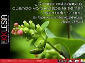 Job 38:4
